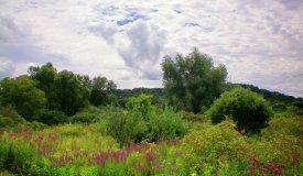 Trophy Deer and Waterfowl Property, Dane Cty, Mazomanie, WI