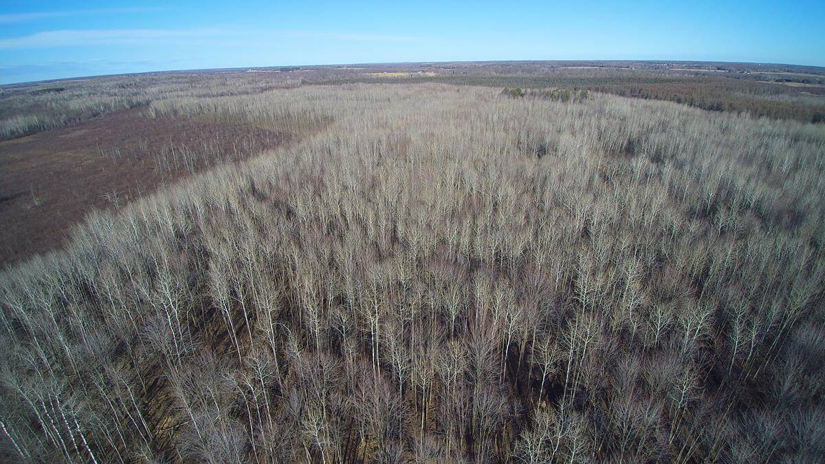 285 acre hunting parcel build sites in chippewa county wi 285 acre hunting parcel build sites in chippewa county wi