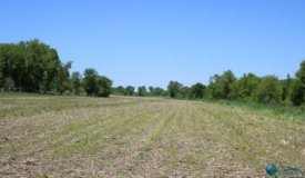Agriculture Crop Land for Sale in Dodge County Wisconsin