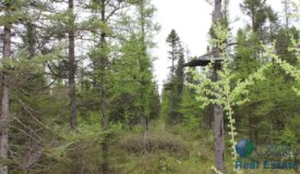 """Secluded Trophy Buck Property in """"Spencer Swamp"""" Clark County, WI"""