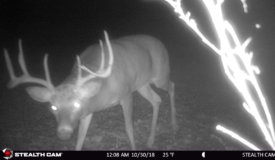 Outstanding Hunting Land with Tillable in Southwestern Wisconsin