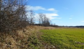 Grand Buildable Parcel with Hunting Opportunities in Washington County