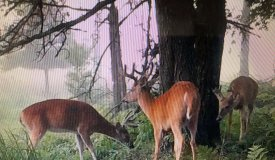 Professionally Developed Hunting Land in Marathon County