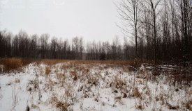 Wooded Acreage Located in Manitowoc County