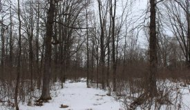 40-Acre Hunting Parcel in a Great QDM Area Wood County WI