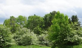 Buildable lot  with a view in Arpin Wisconsin