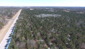 282 Acre Timber and Hunting Property for Sale