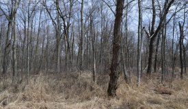 Premier Hunting Parcel in the Heart of Lewiston Township, WI