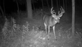Outstanding Hunting Parcel and proven producer of trophy class whitetails, located in southern Marinette County Wisconsin