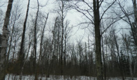 1.73 acre buildable site with lake frontage Sawyer County