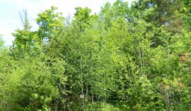 Buildable Vacant Land in Sawyer County WI
