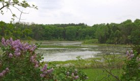 Beautiful 60-acre parcel of central Wisconsin hunting land