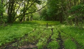 Premier Hunting and Recreational Property in Ozaukee County