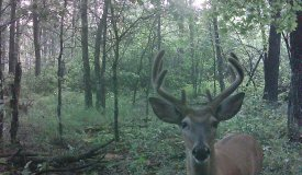 Deer and Turkey Property on this Wooded Parcel in Adams County WI
