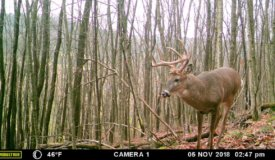 Affordable Hunting Land For Sale in Southwestern Wisconsin