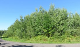 Wooded Residential Lot in Douglas County