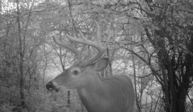 Big Buck Hunting Land For Sale in Southwestern Wisconsin