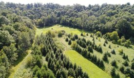 Diverse Acreage on Dead End in Monroe County WI