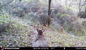 Monumental Deer Hunting Land For Sale in Southwestern Wisconsin