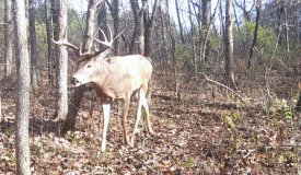 Whitetail Deer Hunting Land For Sale in Southwestern Wisconsin