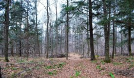 Building and Hunting Wooded 38 Acre parcel in Marathon County, WI