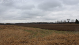 Great Mix of Ag. Land and Hunting Land in Taylor County