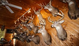 Trophy Whitetail Hunting Camp in Southwestern Wisconsin