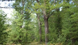 Hunting Land with Buildable area in Granton, Clark County WI