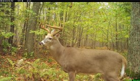 Eastern Marathon County Hunting/Building Property