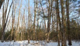 Dynamic Hunting Parcel Located in Shawano County WI