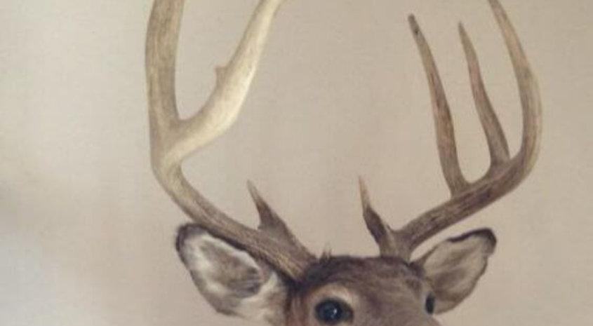 #1 Biggest buck Wood county
