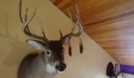 South Central Whitetail Dream Property Marquette County