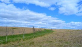 Building Site Surrounded by Natural Prairie in Iowa County WI