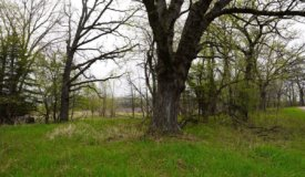 34 AC Dalton Wisconsin Live Land Auction 6/15/19 1PM