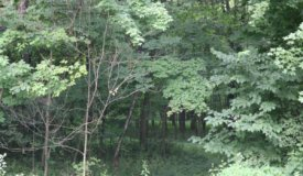 Land For Sale in the Town of Ashippun Wisconsin