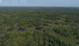 Phenomenal Hunting Land For Sale in Adams County,