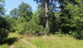 Ready to Hunt Acreage in Wood County, WI