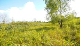 Wisconsin Land For Sale in Dodge County