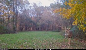 Big Buck Hunting Land for Sale in Crawford County, WI