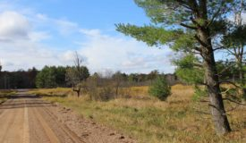 Great Hunting Land with Building Possibilities Clark County WI