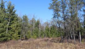 40 Acre Parcel with Multiple Possibilities in Juneau County WI