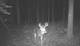 Prime Hunting Land Minutes from Wisconsin Dells
