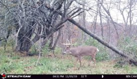 Prime Ridgetop Hunting Land With Build-Site in SW Wisconsin