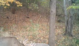 Vernon County WI Hunting Land for Sale