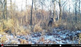 Columbia County Hunting and Recreational Land For Sale