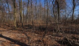 Wisconsin Land For Sale in Dodge County-Recreation Property & Building Sites