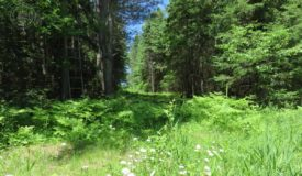Large, Buildable, Hunting or Recreational Property Ashland County