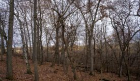 Hunting, Fishing and Recreational Property in Monroe County WI