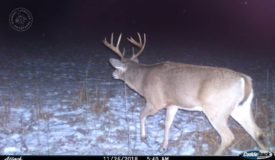 A True Trophy Property in Langlade County WI