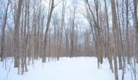 Langlade County WI Hunting Parcel